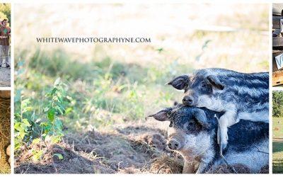 Newfields NH Family Photographer | Vernon Family Farm