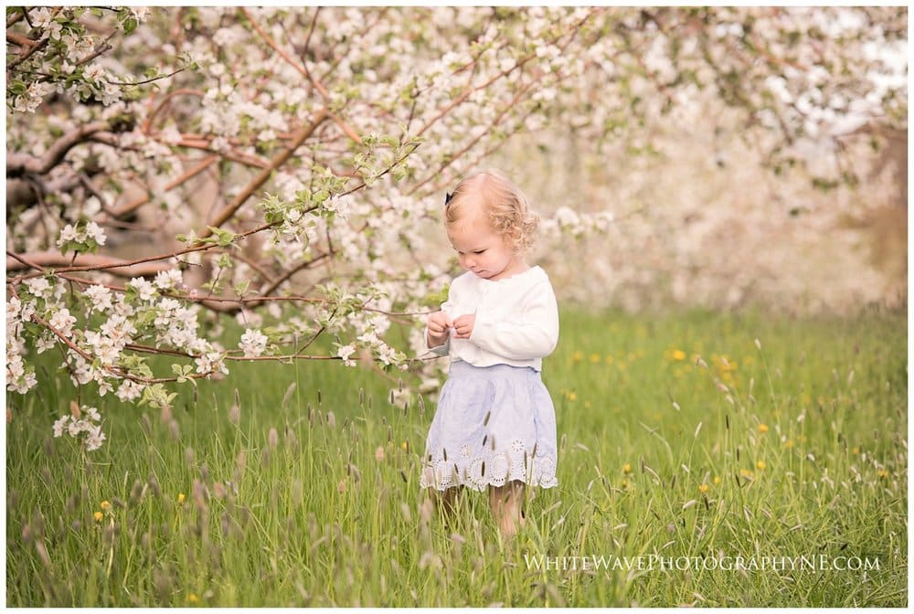 Family Photographer in NH | Apple Blossom Sessions 2018