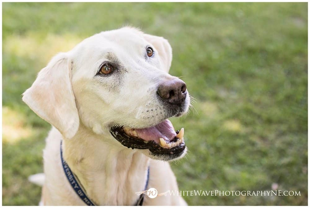 Newfields, NH Family Photographer | Ollie – THE TOWN DOG